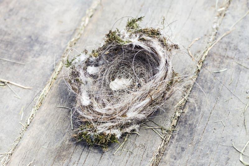 Birds Nest royalty free stock image
