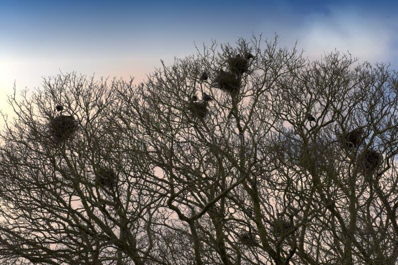 Birds nests royalty free stock image
