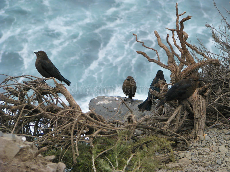 Birds and Ocean royalty free stock images