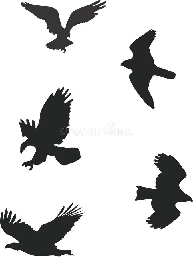 Free Birds Of Prey Stock Photo - 3541310