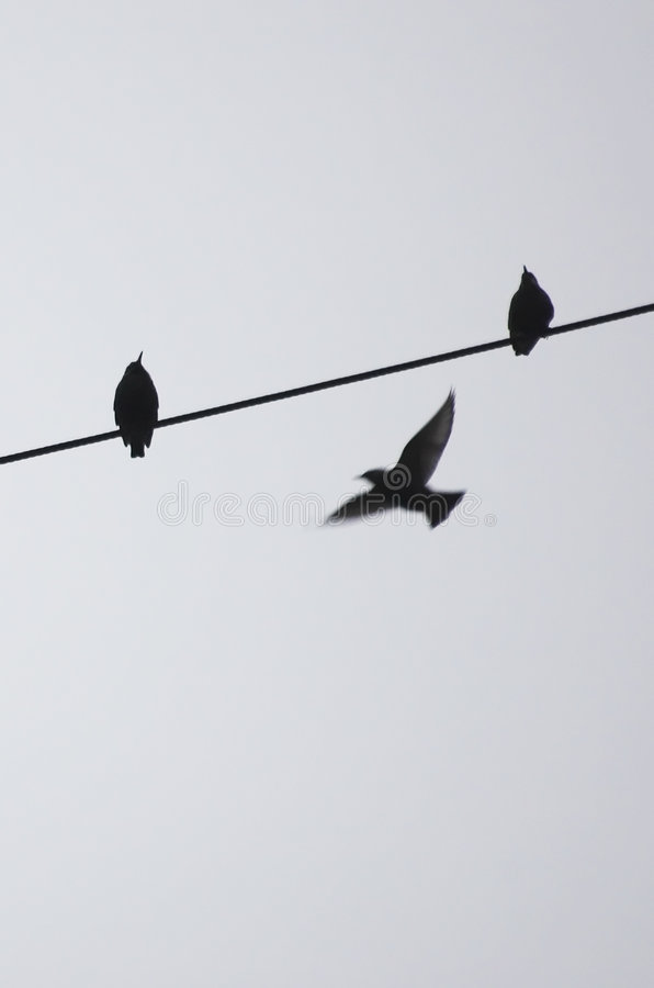 Free Birds On A Wire Royalty Free Stock Photos - 3751958