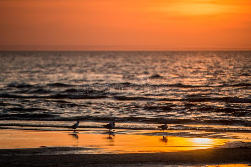 Birds during orange sunset near ocean royalty free stock photography