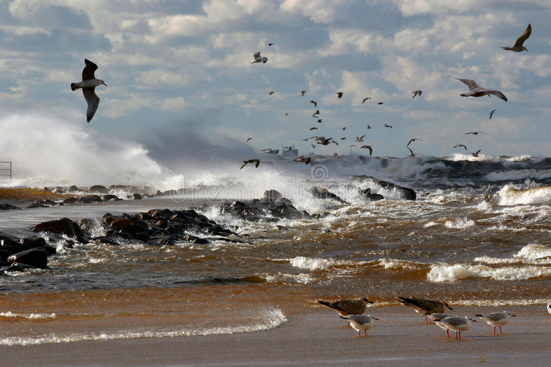 Birds over the sea. In storm royalty free stock images
