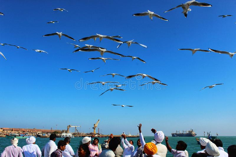 Birds over sea getting feeded stock photo
