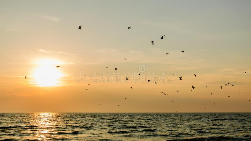 Birds over the sea at sunset.  royalty free stock image