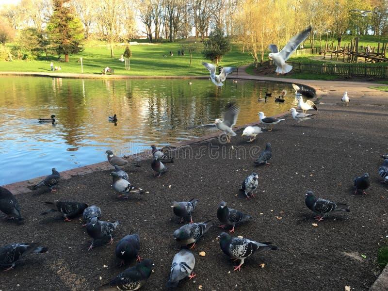 Birds in the park stock photos