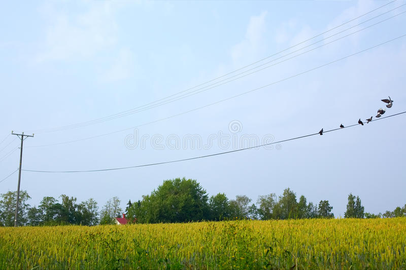 Download Birds perched on wires stock image. Image of utility - 15517857