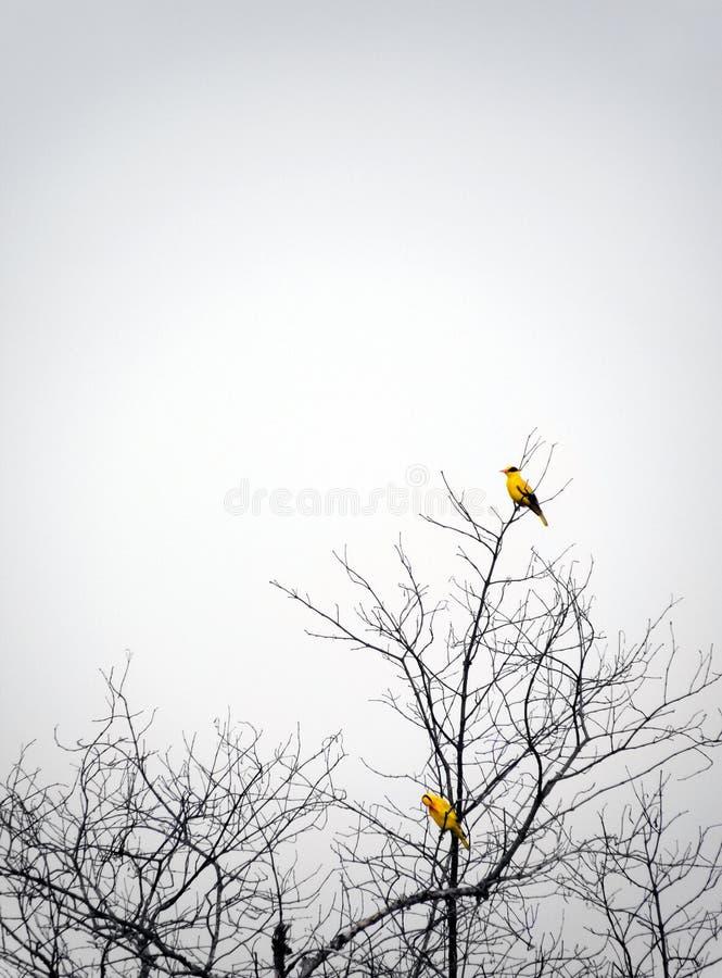 Download Birds Perching In Autumn Tree Mist Stock Photos - Image: 6885133