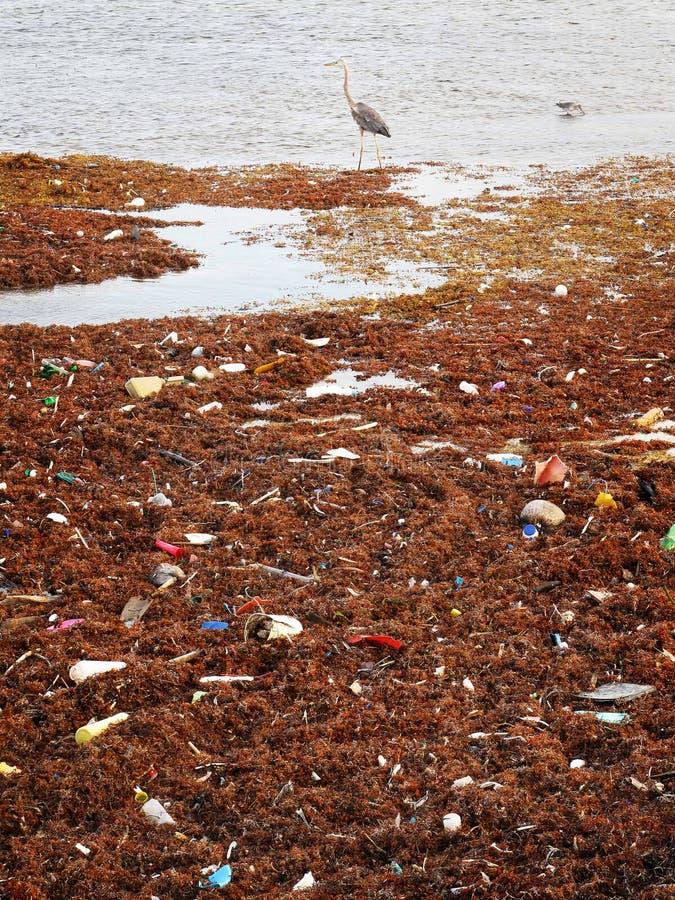 Birds picking thru Trash stock image