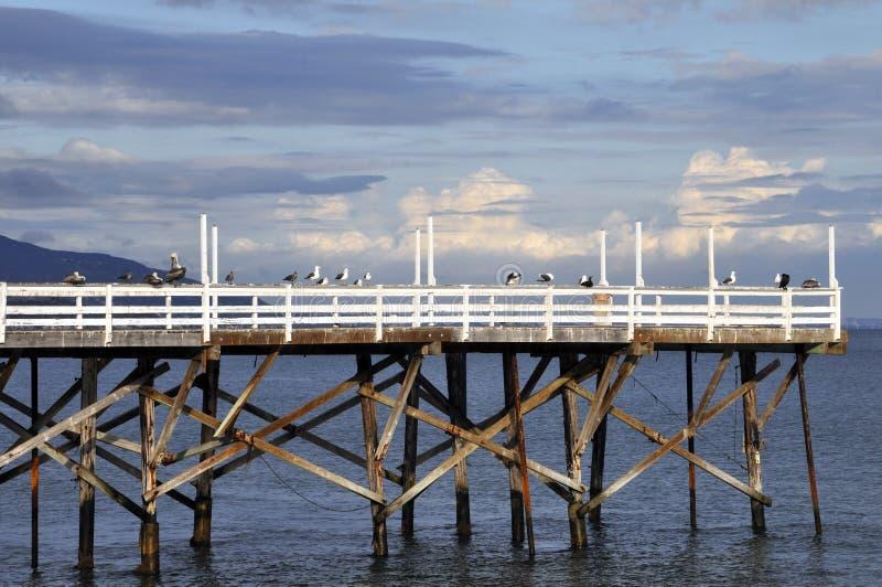 Birds on a Pier stock photos
