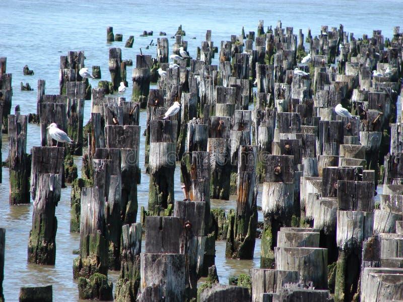 Birds on pilings
