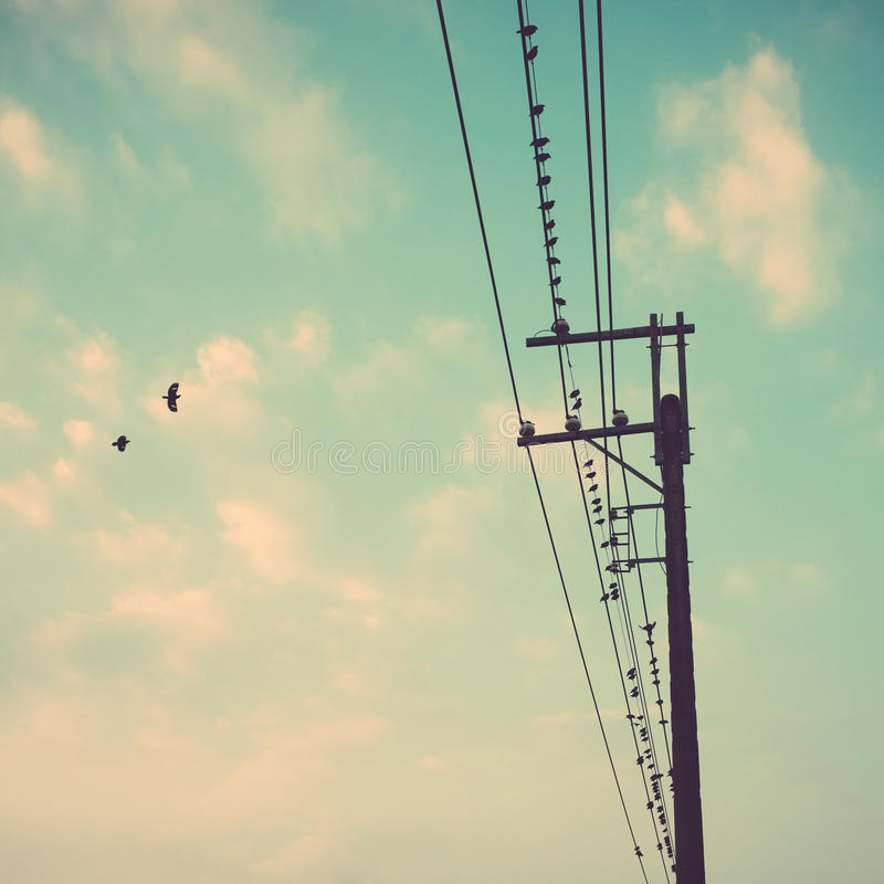 birds on power line cable against blue sky with clouds background vintage retro royalty free stock photography