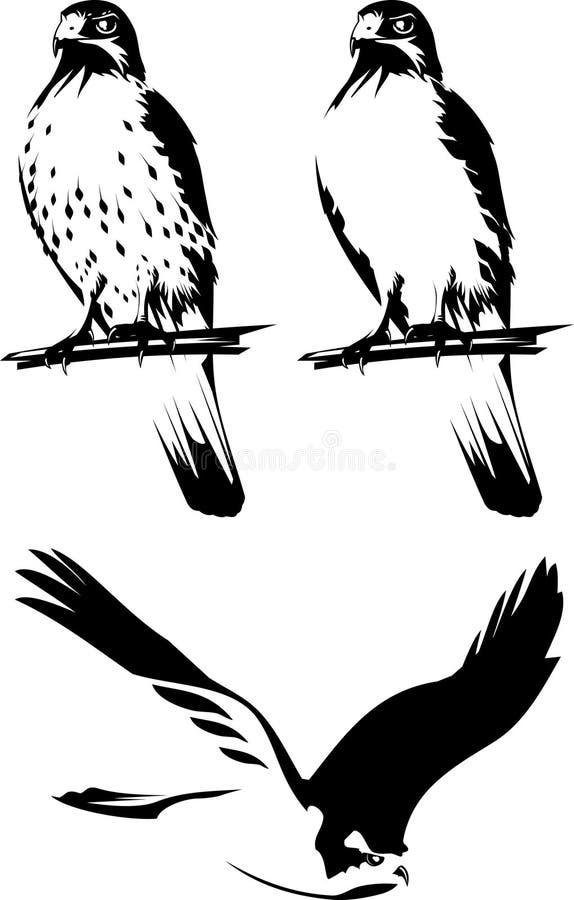Download Birds of prey stock vector. Image of predator, flight - 10588358