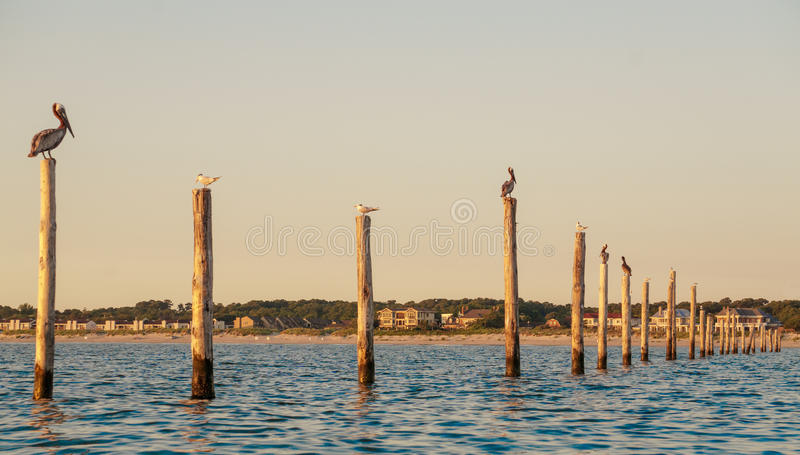 Birds on Pylons stock images