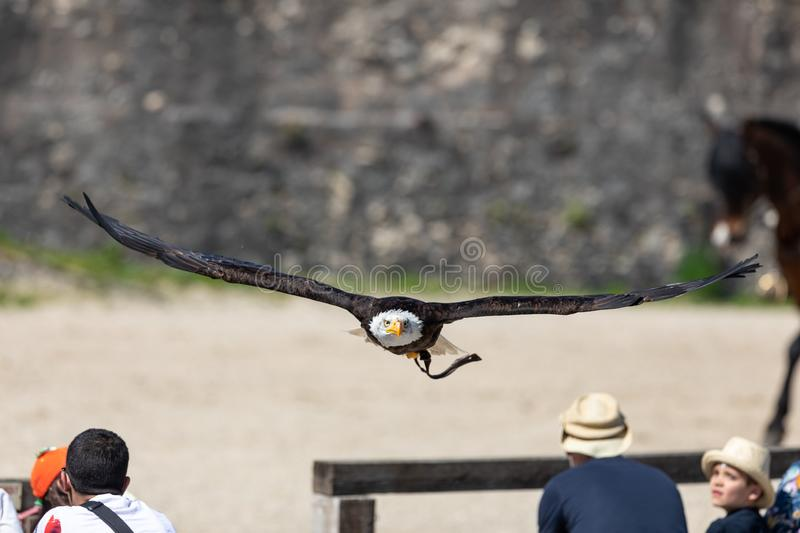 Birds and raptors show in provins, France stock photo