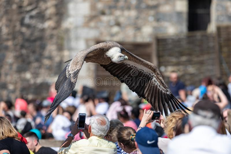 Birds and raptors show in provins, France royalty free stock photography