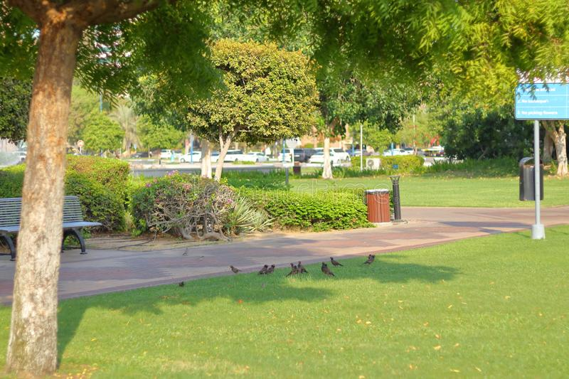 BIRDS RELAXING ON THE SHADE. BIRDS RELAXING IN THE SHADOW royalty free stock image