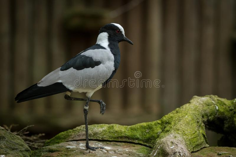 When the birds rest ona a single leg stock image