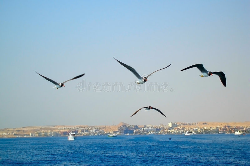 Birds on the sea stock image