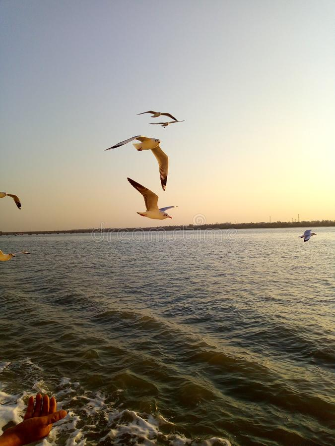 birds see ship water animals royalty free stock photography