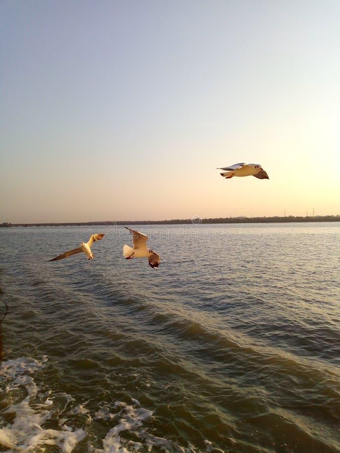 birds see ship water animals royalty free stock photo