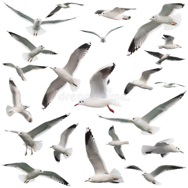 Birds set isolated stock photography