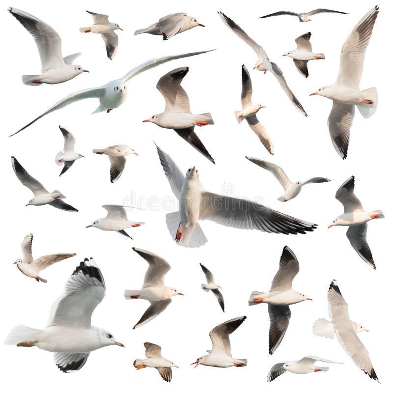 Birds set isolated. On white stock photos