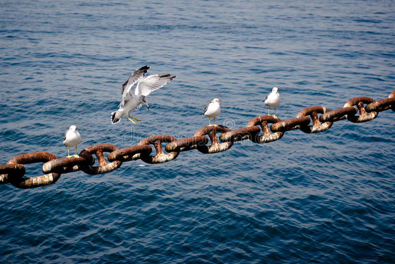 Birds at the ship chains. stock photography
