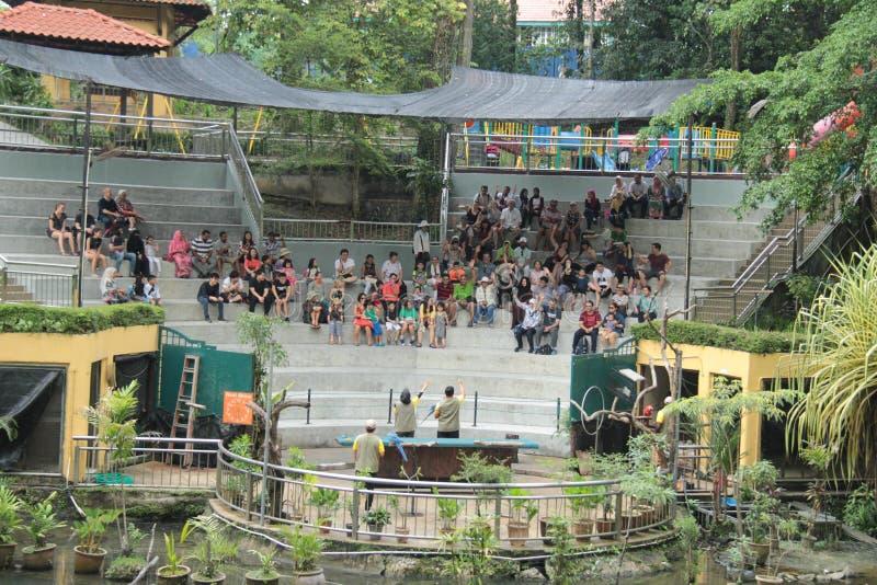 Birds show at KL Bird park stock photo