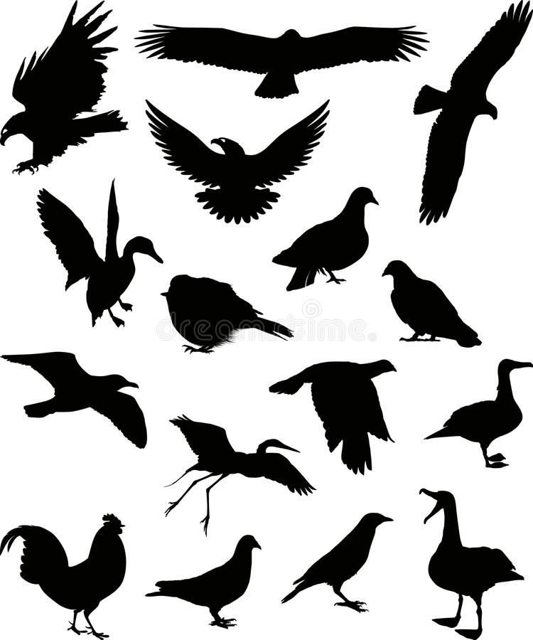 Free Birds Silhouette 1 (+ Vector) Royalty Free Stock Photo - 10148415