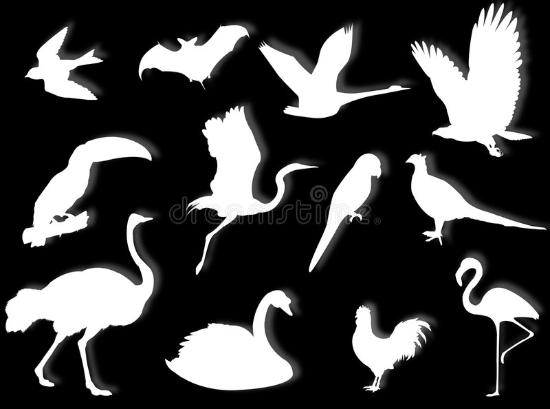 Birds silhouette royalty free illustration