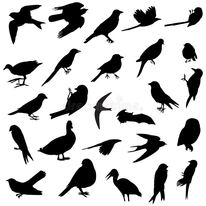 Download Birds Silhouettes Royalty Free Stock Image - Image: 5137256