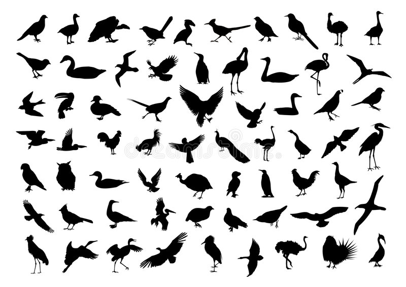 Download Birds silhouettes stock vector. Image of chase, rostrum - 8942604