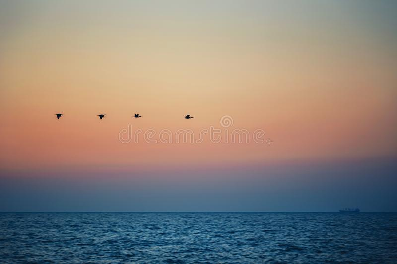 Birds silhouettes flying above the sea against sunset, sunrise stock image