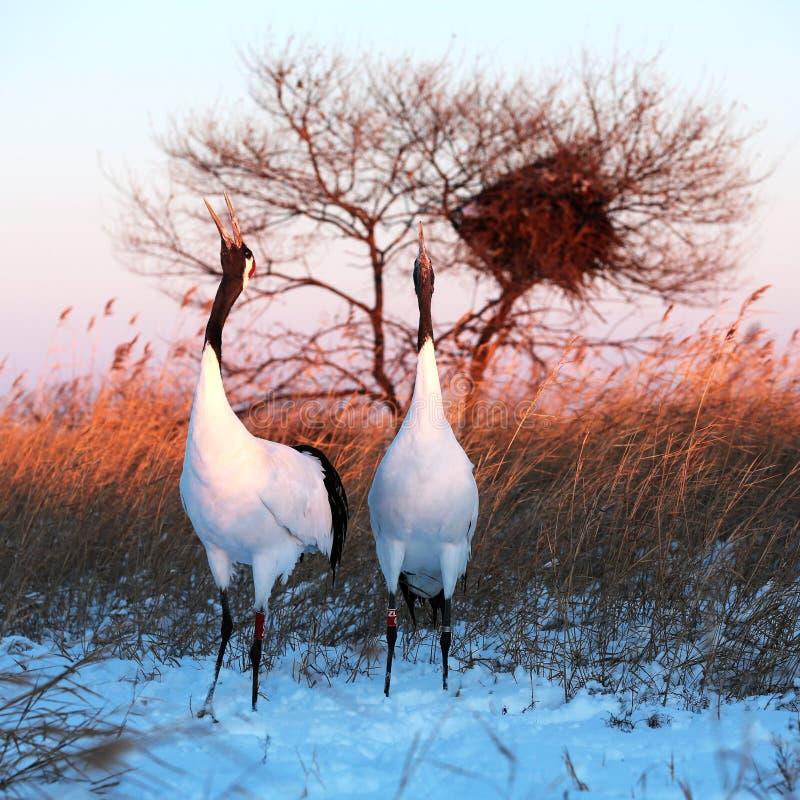 Birds sing royalty free stock photos
