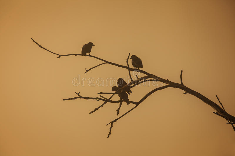 Birds. Sitting on a branch in morninglight, Sweden royalty free stock photography