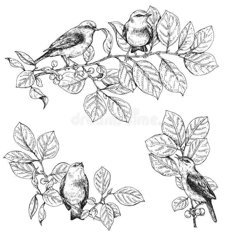 Birds Sitting On Branches Sketch Stock Vector