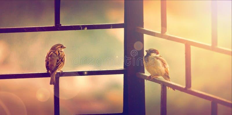 Birds Sitting Outside Free Public Domain Cc0 Image
