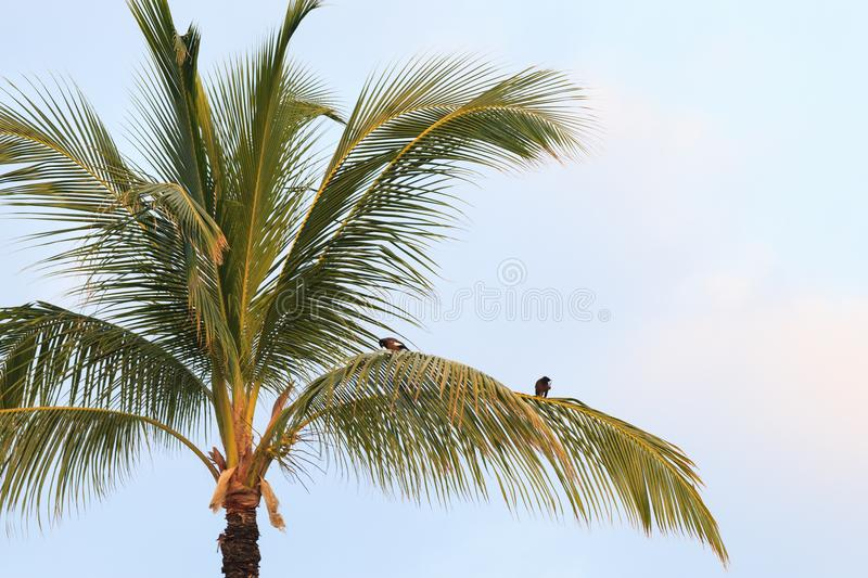 Birds on Palm Trees royalty free stock images