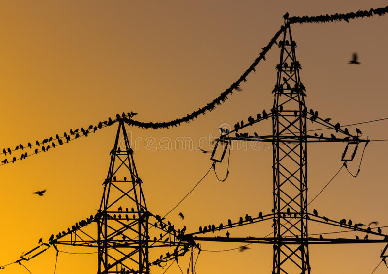 Birds sitting on power lines in the morning royalty free stock photo