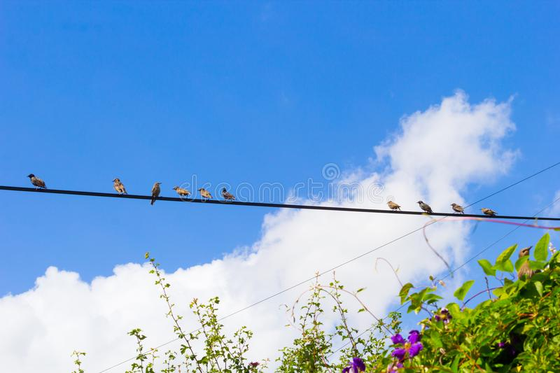 Birds sitting on wire against blue sky. On Summer stock photos