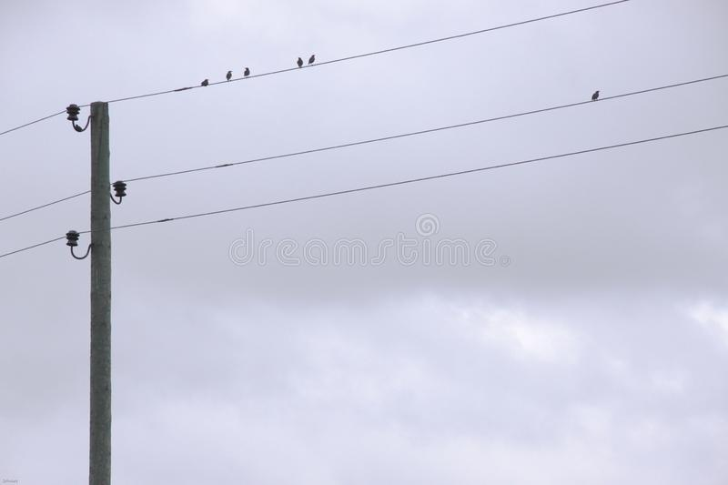 The birds are sitting on the wires, cloudy day. stock image