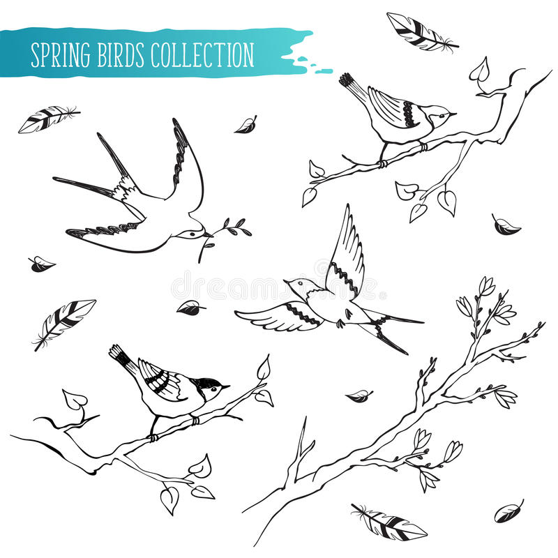 Birds Sketch Collection Stock Vector Image Of Branch