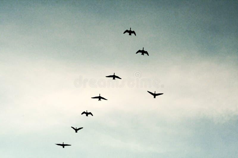 Download Birds in the sky stock photo. Image of spring, wildlife - 4362640
