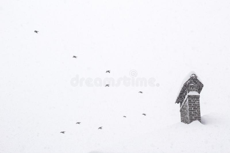 Birds in sky Concept image on winter season Showfall and Fog effect Beautiful Winter landscape scene background with snowfall. Beauty winter backdrop Winter royalty free stock images