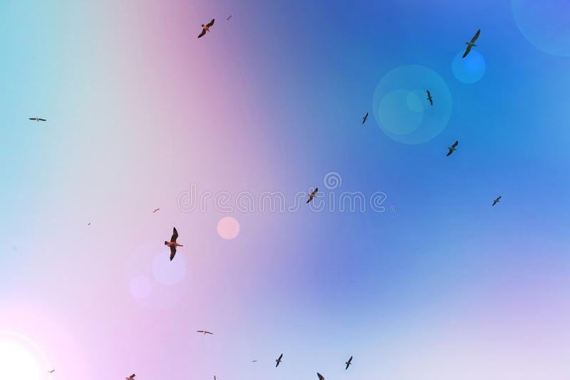 A flock of seagulls in flight royalty free stock photography