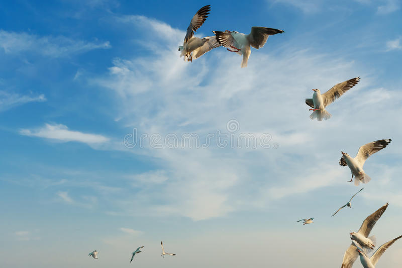 Birds snatching food in sky stock image