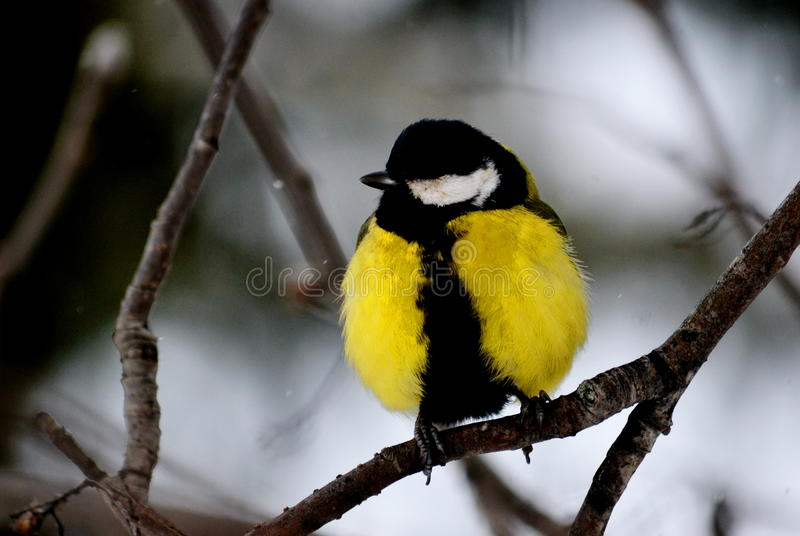 Birds of the steppes. Small birds of the steppes form greater group an animal stock image