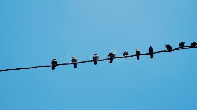 birds on a string stock photos