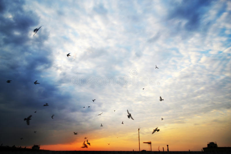 Download Birds and the sunrise stock photo. Image of southern - 21225934
